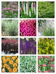 Shade Garden Design Zone 4 A Few Hearty Drought Resistant Perennials That Will Grow In