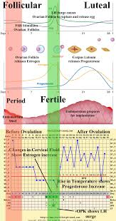 Ovulation Chart Pregnancy Signs Fertility Friend Lesson 3 Cycle Phases Fertility