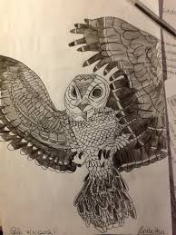 Owl Drawing Cool Animal Pencil Pen Paper Hobby Birds Nature