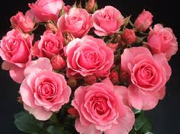 Image result for roses of peace