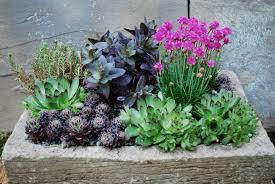 Small Picture Succulent Gardens Maggio 2 1251 2017 Garden Castroville Nursery