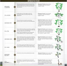 Cultural Practices North Carolina Soybeans