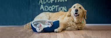 pet insurance in 2017