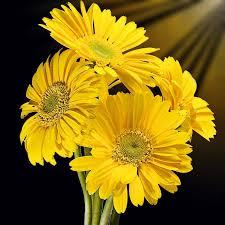 flower plant nature petal flowers
