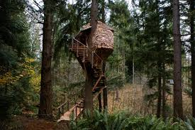 Be In A Tree  Fall Favorites U2014 Nelson TreehouseTreehouse Builder Pete Nelson