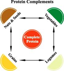 Complete Protein From Vegan Diet Senseicat Steemit