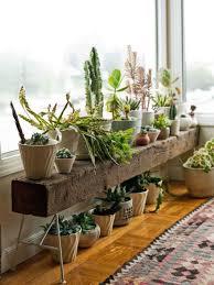 Boho Indoor Plant With Desert Decor