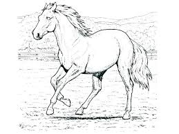 spirit horse coloring pages spirit and rain horse coloring pages children coloring coloring pages of horses