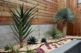 Small Picture Garden Ideas In South Africa Home dzine garden ideas xeriscaping