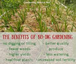 the benefits of no dig gardening