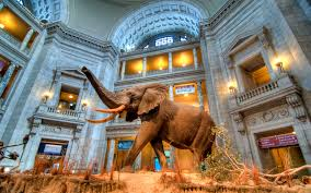 Image result for natural history museum poland