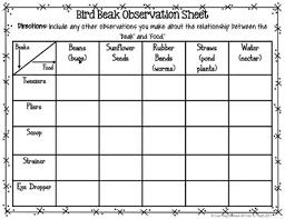 Bird Beak Chart Bird Beak Adaptation Science Activity