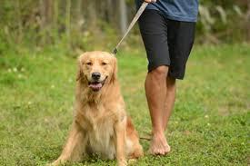 Resultado de imagem para imagem de cão