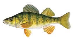 Dnr Fish
