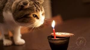 funny happy birthday cat wallpaper