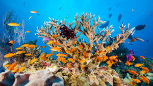Hope For Coral Reefs After Scientists Find Resilient Species