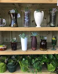 plant and succulents on shelves