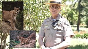 San José Parks, Recreation and Neighborhood Services - Ranger PSA -  Mountain Lion Encounters | Facebook