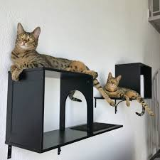 diy cat shelves curved wall for perches furniture