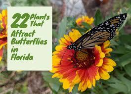 22 plants that attract erflies in