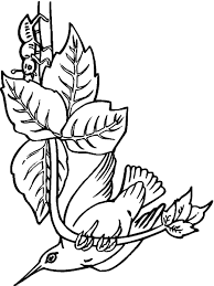 Small Picture Hummingbird Coloring Pages Bird Coloring Club