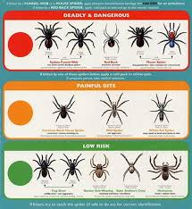 Usa Spider Bite Chart All About Spiders Types Of Spiders Life Cycle Etc