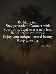 Tree Quotes Custom Be Like A Tree Stay Grounded Connect With Your Roots Turn Over A
