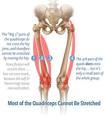 Upper Leg Muscle Chart Massage Therapy For Your Quads