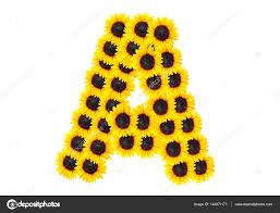 letra de un alfabeto con girasol foto de stock