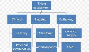 Organizational Structure Scope Work Breakdown Structure