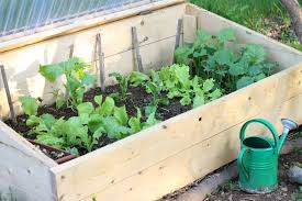 cold frame garden. Interesting Frame There Are Many Benefits To Gardening In A Cold Frame Cooler Climates  Learn What Throughout Cold Frame Garden W