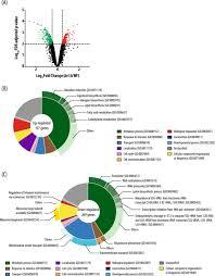 Translation Vs Transcription Venn Diagram Ixr1 Regulates Ribosomal Gene Transcription And Yeast