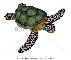 Small Picture Turtle Illustrations and Clip Art 10290 Turtle royalty free