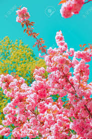 Fashion Aesthetics Wallpaper. Pink ...