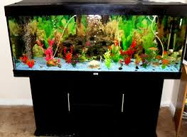 furniture fish tanks. Modern Natural Fresh Fish Tank With Decoration Of The Make It Seems Furniture Tanks