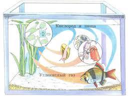 Аквариум маленькая искусственная экосистема Его обитатели  Круговорот веществ в аквариуме