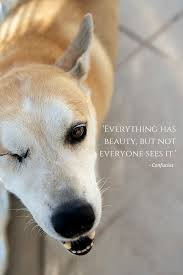 Everything Has Beauty But Not Everyone Sees It Confucius