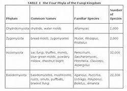 Biology Phylum Chart