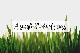 single blade of grass. A Single Blade Of Grass. Date: July 23, 2018Author: Sherina Harris 3 Comments Grass