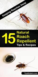 Keeping Roaches Away 15 Natural Roach Repellent Tips And Recipes