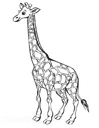 Giraffe Coloring Giraffe Colouring Page 2 Giraffe Colouring Pages