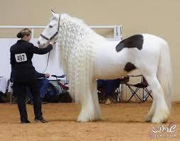 من اروع الحيوانات images?q=tbn:ANd9GcT