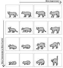 Cat Body Language Chart Cat Communication And Language Pet Care Information