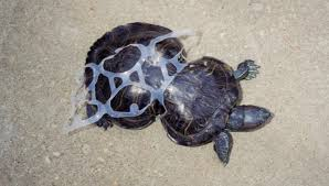 Image result for animal die because litter