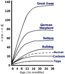 dog breed size chart how to predict a puppys adult dog weight