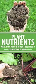 plant nutrients what they need and