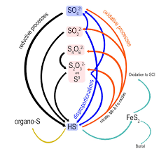 Missing Links In The Marine Sulfur Cycle Identity And