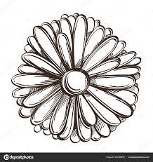 календулы цветки руки обращается эскиз стиля декоративный цветочный