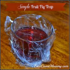 quick tip tuesday 20 fruit fly trap