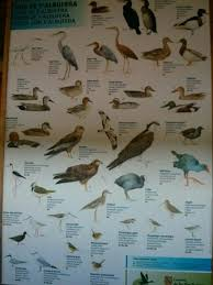 Bird Identification Chart In A Hide Picture Of Parque